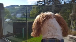 Baxter looking out at Loch Tay